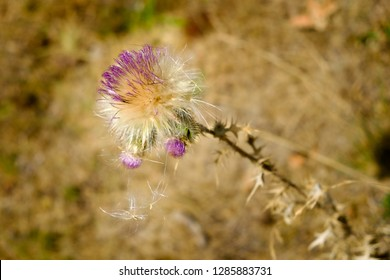 Close up off a blowball with purple