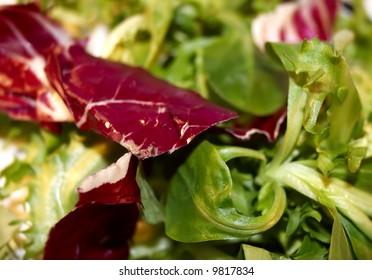 close up off green salad