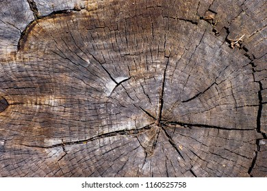 Close up of old cut wooden stump with cracks and annual rings as pattern. Abstract natural texture background