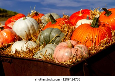 Close up of old farm equipment filled with straw holding colorful display of pumpkins on sunny fall morning
