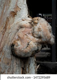 Close up of an old tree burl in Palm Cove