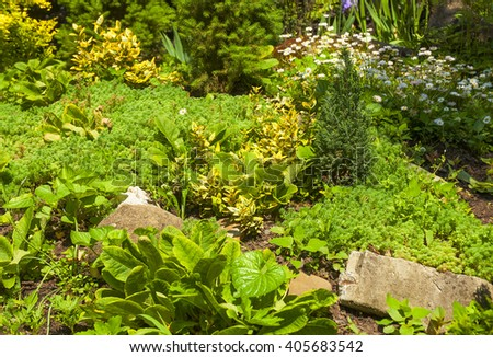 Close On Alpine Garden Landscape Design Stock Photo Edit Now Amazing Alpine Garden Design