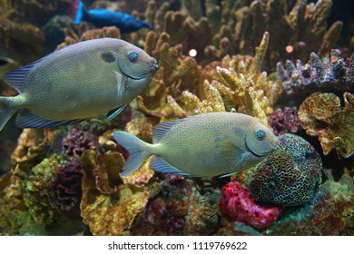 close up on beautiful tropical fish in the reef