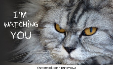 Close up on a cat's face with text ' I'M WATCHING YOU'