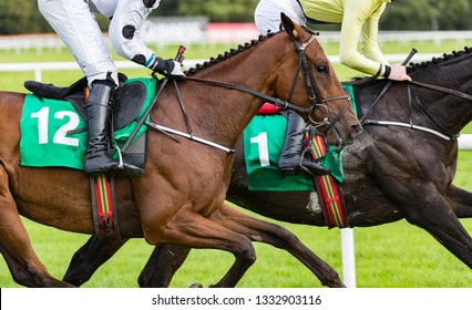 Close up on competing  race horses galloping