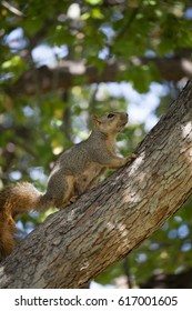 Close up on a Cute squirrel climbing on a tree