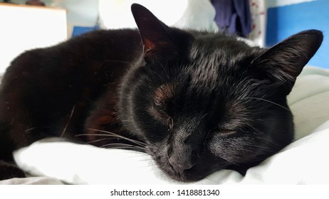 Close up on the face of a black cat relaxing on a bed.