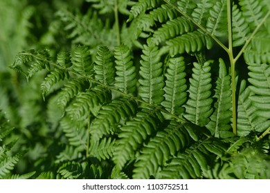 Close up on fern leaf. Diffuse leaves in the background