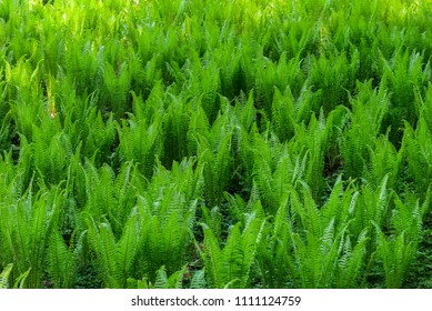 close up on fern leafs, background or texture