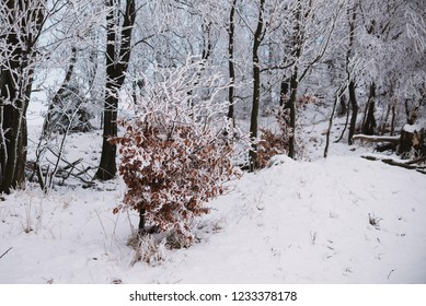 close up on froze  tree in the mountain, winter background