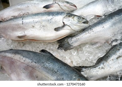 close up on frozen salmon in ice for sale
