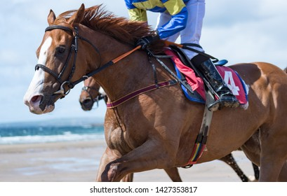 Close up on galloping race horse on the beach