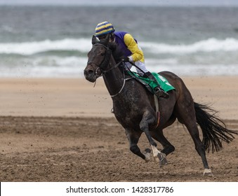Close up on Galloping race horse horse racing action on the beach