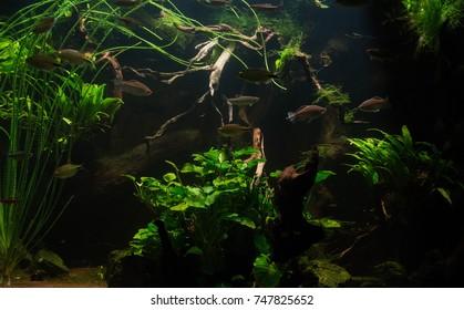 close up on green fresh water aquarium