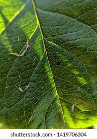 Close up on green leaves texture