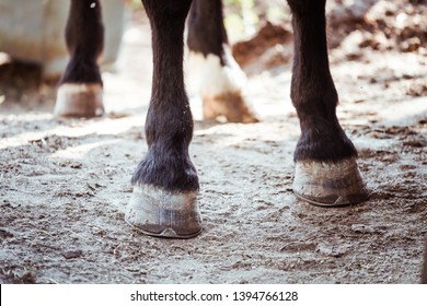 Close up on the hooves of a horse