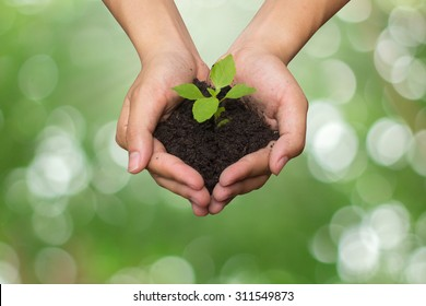 close up on human hand gesture hold a little growing plant on blurred green nature for safe the world energy concept.