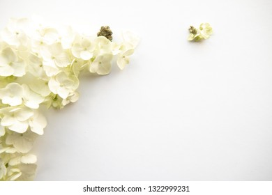 Close Up on Hydrangea Flower with Cannabis Flower Nugs for Product Background Frame  - Cannabis Wedding