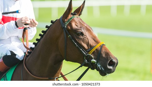 Close up on Jockey and racehorse