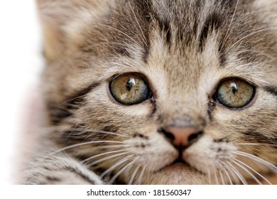 close up on a kittens face portrait