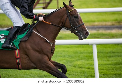 Close up on race horse galloping on the race track