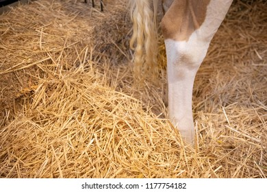 Close up on the rear legs and tail of a heifer dairy cow, standing in a bed of hay, with space for text on the left