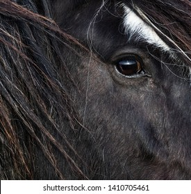 Close up on side profile and Eye of a black long haired horse