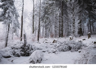 close up on snow in the forest, winter background