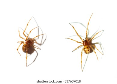 Close up on a spider isolated on white background