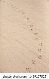 Close up on a trail of seagull footprints in beach sand, in natural background