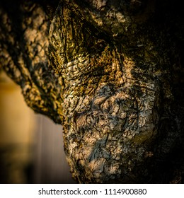 Close up on a tree