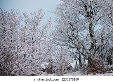 close up on tree covered by the snow. winter background