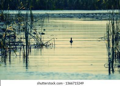 Close up on water in  lake okeechobee Floridaduring sunset