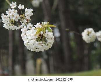close up on a white floer