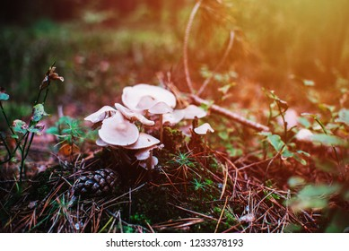 close up on white mushroom in forest