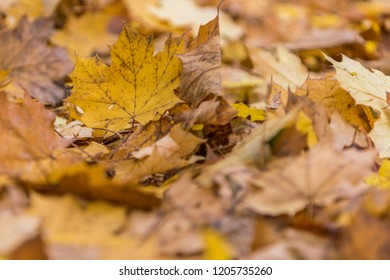 Close up on yellow leaves on the ground