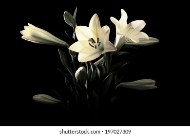Close up on Yellow Lily Black & White