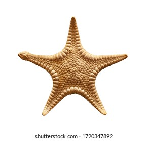 Close up one dried sea starfish (sea star, asteroid or five finger fish) isolated on white background, elevated top view, directly above