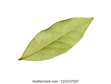 Close up one green laurel leaf isolated on white background, elevated top view, directly above