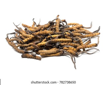 close up Ophiocordyceps sinensis (CHONG CAO, DONG CHONG XIA CAO) or mushroom cordyceps this is a herbs. Medicinal properties in the treatment of diseases.