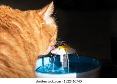Close up of orange cat drinking from a pet water fountain; dark background