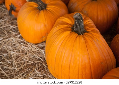 Close up of orange pumpkin patch in a field of straw. Background for fall, autumn, Halloween, Thanksgiving, seasonal display.