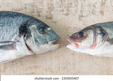 Close up of an orata and a seabass heads.