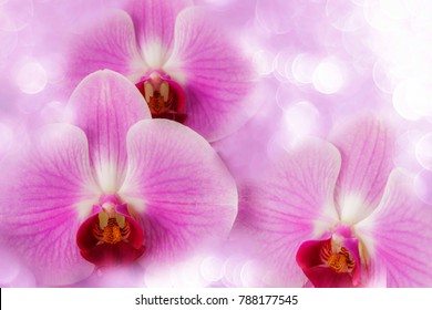 Close up orchid flowers on light bokeh background.Sweet violet flowers