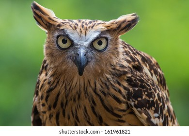 Close up of owl with green background