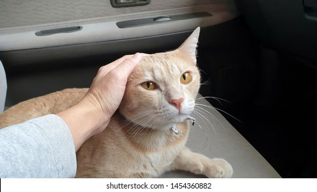 Close up owner's hand stroking an adorable bright orange cat who wearing fabric collar.A ginger cat lying on the car seat inside a car when travel with owner on vacation.