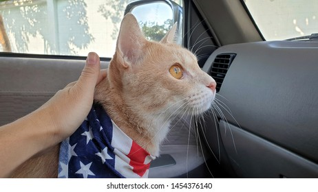 Close up owner's hand stroking an adorable young bright orange cat who wearing fabric collar.A ginger cat standing on the car seat inside a car looking out window when travel with owner on vacation.