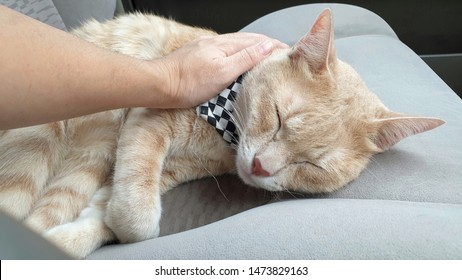 Close up owner's hand stroking an adorable young bright orange cat who wearing fabric collar.A cute ginger cat sleeping on the car seat inside a car when travel with owner on vacation.