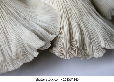 Close up of oyster mushrooms against a grey background