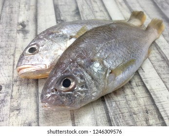 Close up Pagellus bogaraveo or Red Seabream or Ikan Gelama over wood background.